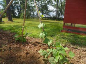 garden6-17 004