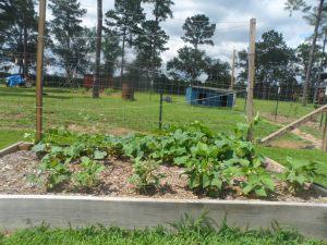 garden6-17 006
