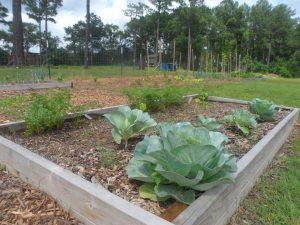 garden6-17 009
