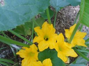 Garden 7-26 004