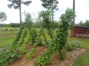 Garden 7-26 012