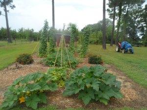 Garden 7-26 014