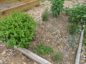 Garden 7-26 020