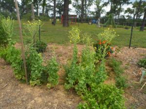 Garden 7-26 024