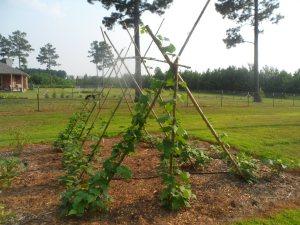 garden7-2 003