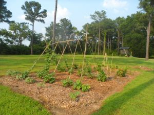 garden7-2 004