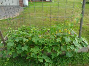 garden7-2 006