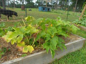 garden7-2 008