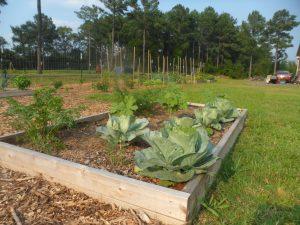 garden7-2 012