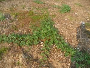 garden7-2 013