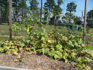 school-garden-bday 037