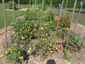 school-garden-bday 038