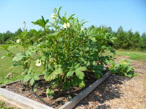 school-garden-bday 041