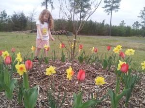 45 Alyssa tulips